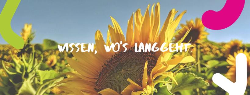 Sommer Sonnenblume